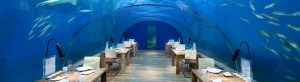 Underwater Marvels of the Maldives